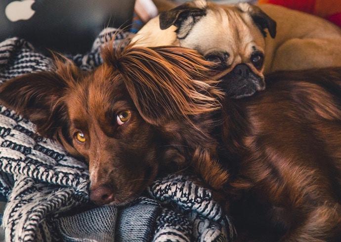 Als jouw hond slecht reageert op harde knallen, zijn er verschillende praktische tips om hem hierbij te helpen en de angst te verminderen