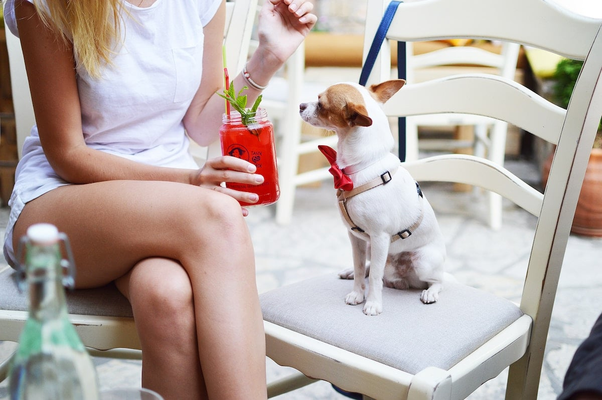 A small dog sitting on a chair in a cafe. A woman holding a red drink sits next to the dog.