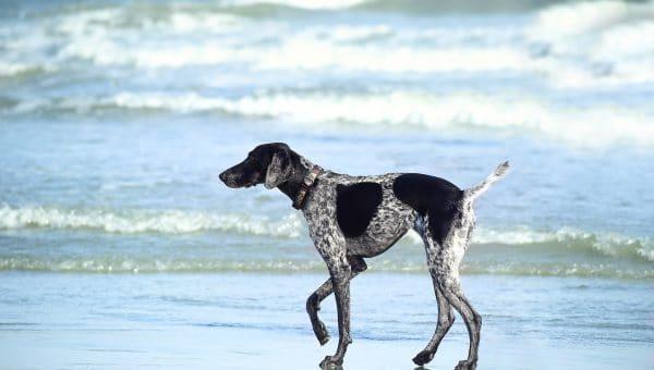 Orlando's Top Pet Names of 2019