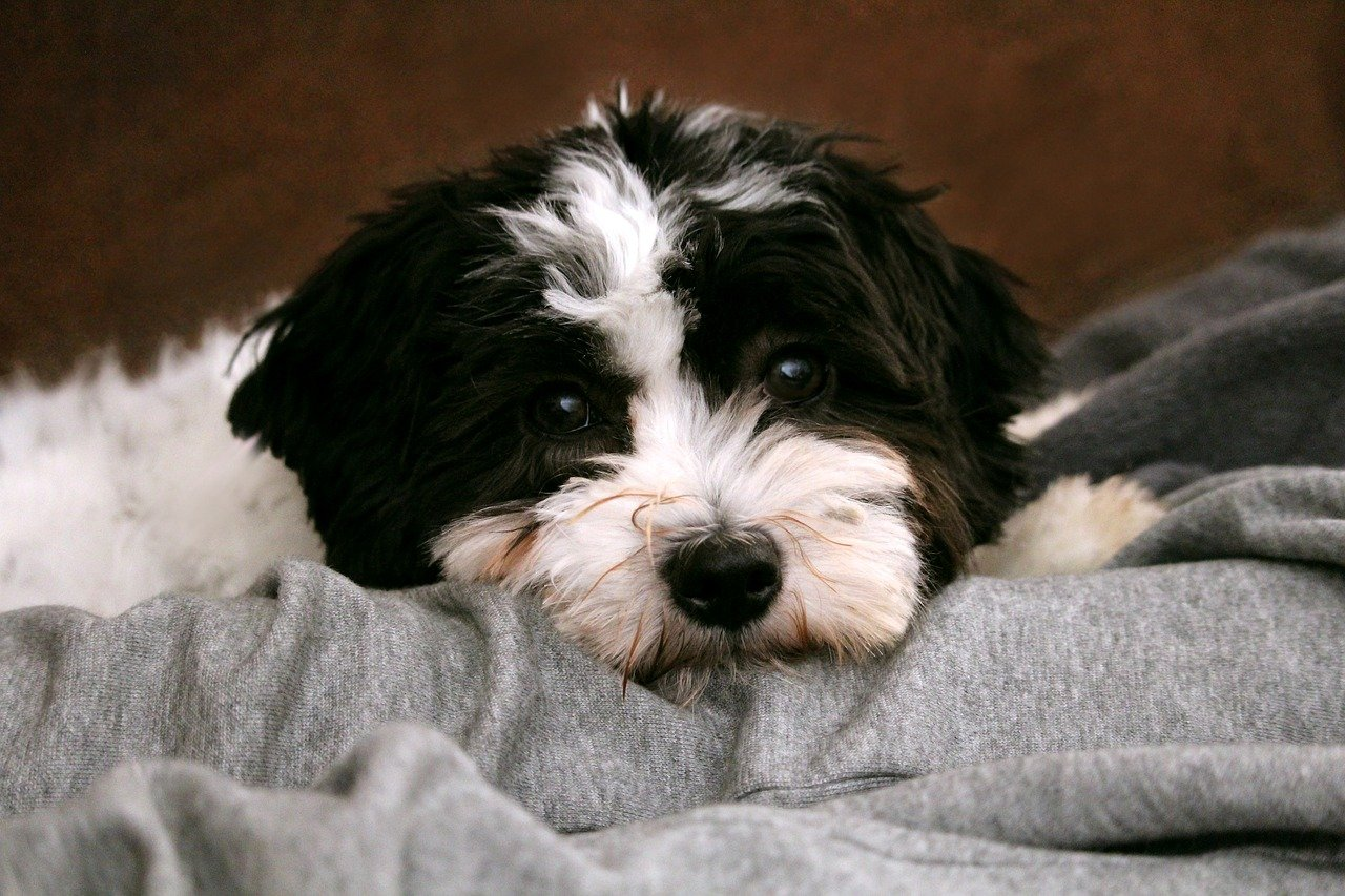 The Best Black And White Dog Names For Your New Pup The Dog People By Rover Com