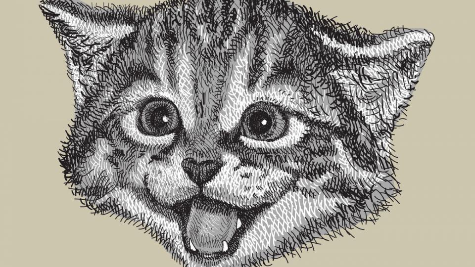 illustration of cat head