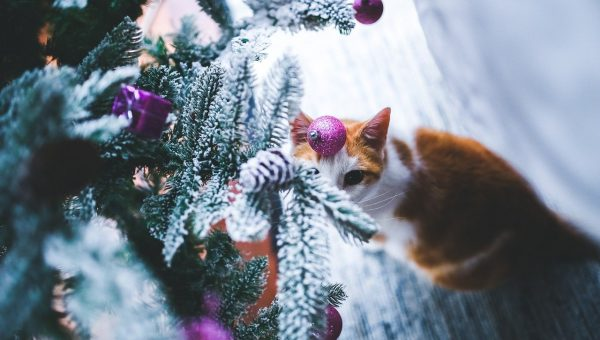 Kitty No-Gos: 11 Holiday Plants, Decorations, and Foods to Keep Away from Your Cat