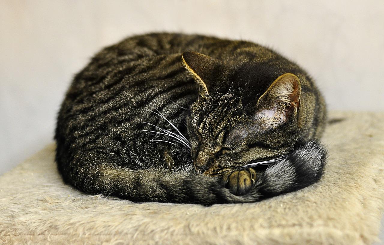 How Do I Know If My Cat Is Cold How To Keep A Cat Warm In Winter