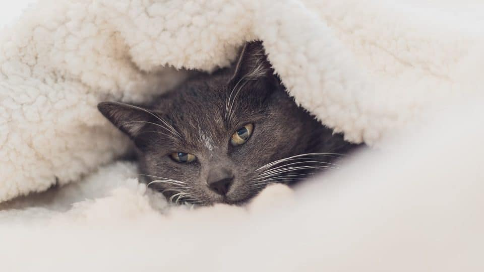 How Do I Know If My Cat Is Cold How To Keep A Cat Warm In Winter