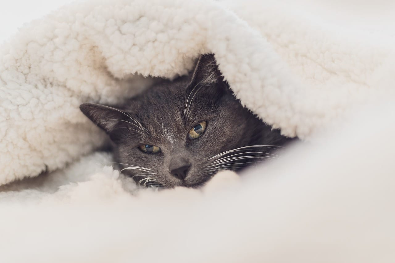 How Do I Know If My Cat Is Cold How To Keep A Cat Warm
