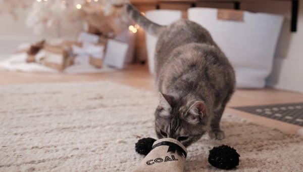 cat with Christmas toy