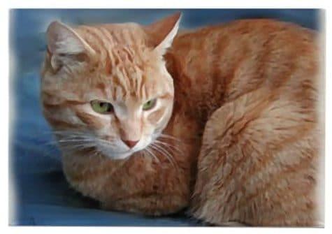 orange cat gift magnet