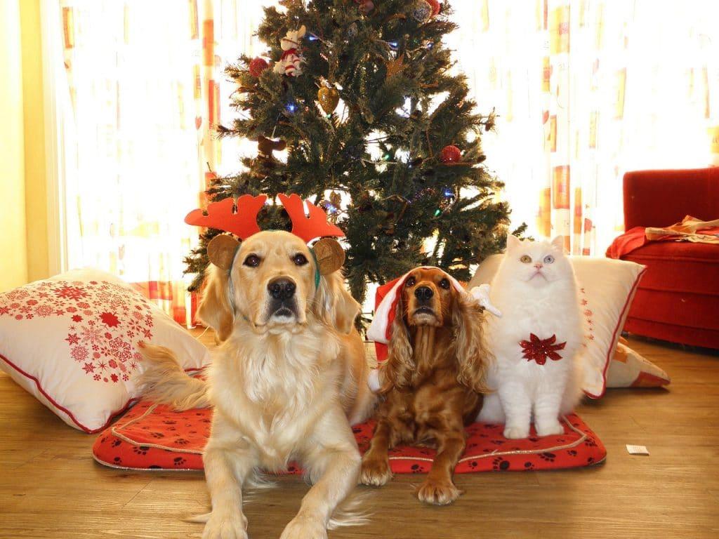 dog lovers stocking stuffer