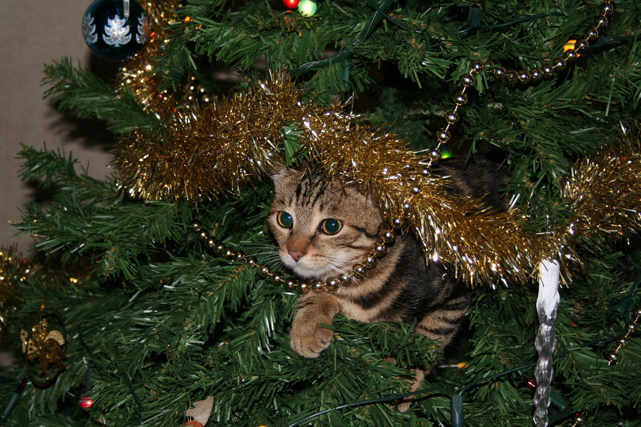 A cat peers out of a Christmas tree, surrounded by garland