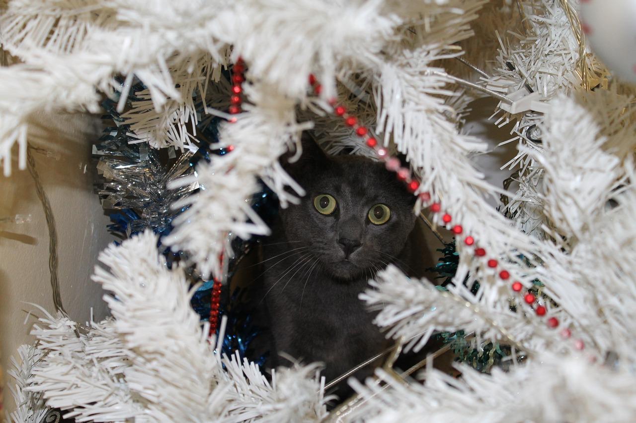 A kitty peers through white Christmas tree branches