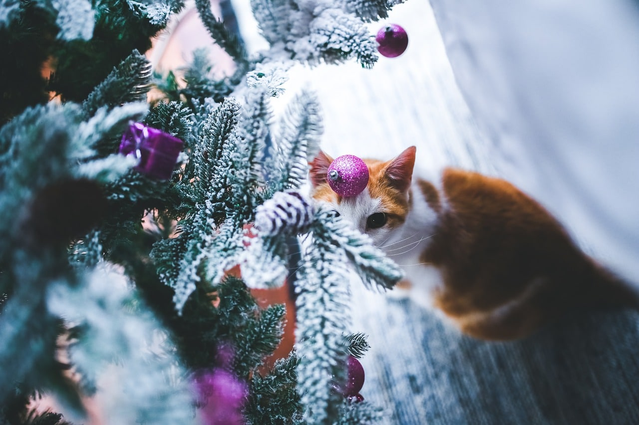 A cat peers up at ornaments out of its reach on a cat proof Christmas tree
