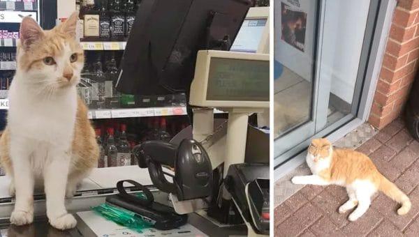Neighbourhood in Uproar after Supermarket Bans Beloved  Cat