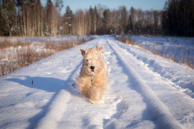Dog Running in Winter - Pixabay