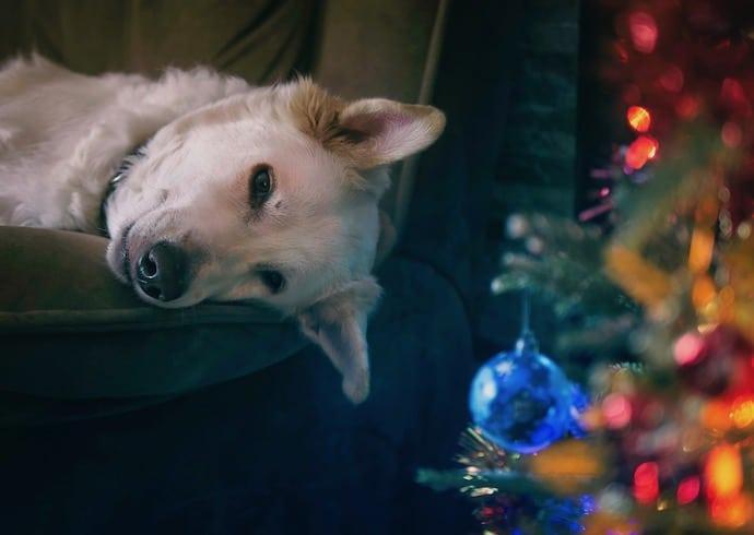 Rond de kerstdagen wordt er al veel vuurwerk afgestoken - veel honden kunnen hier niet tegen