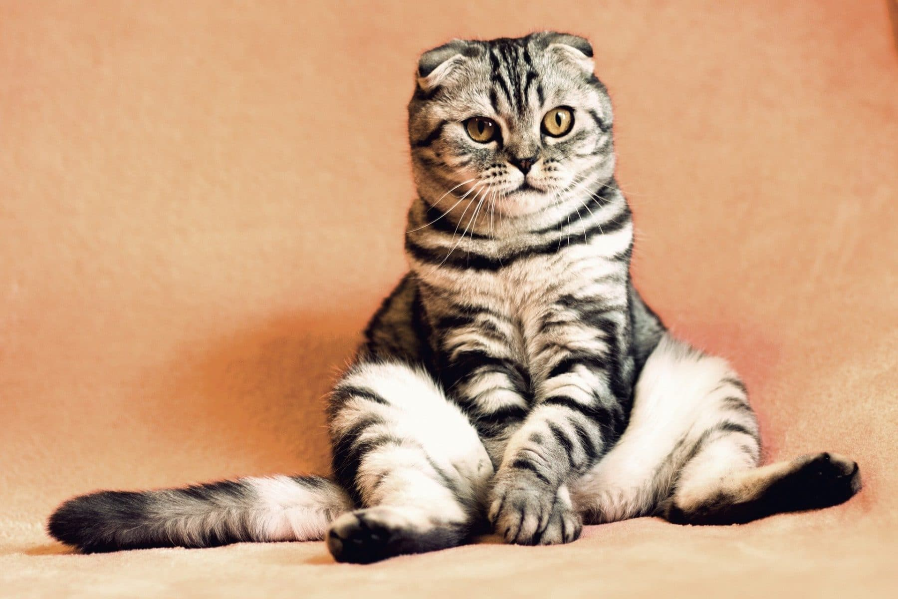 Funny Cat Names For Your Hilariously Offbeat Kitty The Dog People By Rover Com