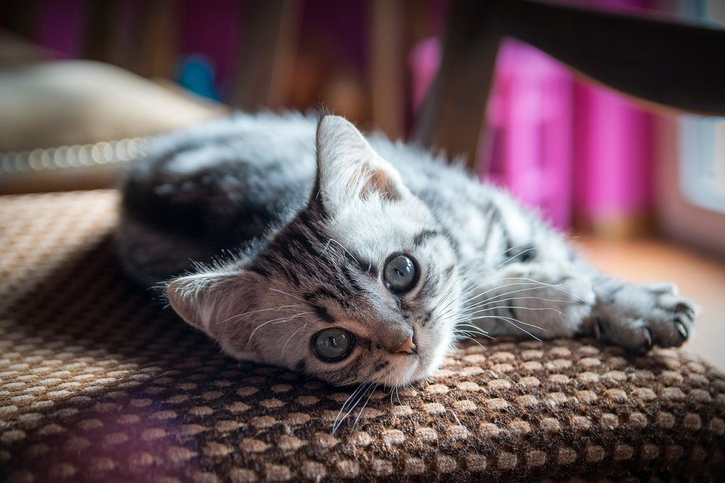 """Cat Names that Start with """"G"""": 170 Name Ideas and More"""