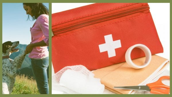 How to Create an Awesome Pet First Aid Kit: A Step by Step Guide