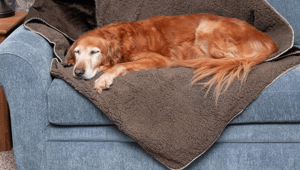 8 Heated Dog Blankets for the Coldest Days