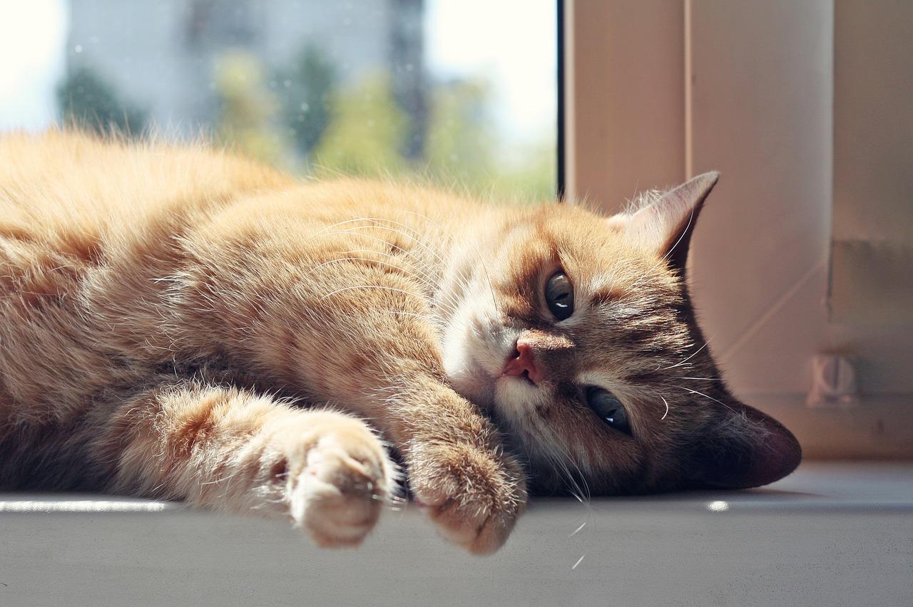 Low Phosphorus Cat Food | The Best Cat