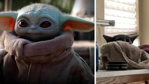 Cats That Look like Baby Yoda Are Taking over the Internet