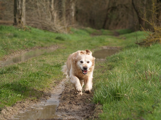 Running With Your Dog in the Mud - Pixabay
