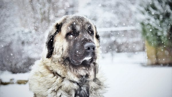 Dog Hypothermia: Prevention and Treatment
