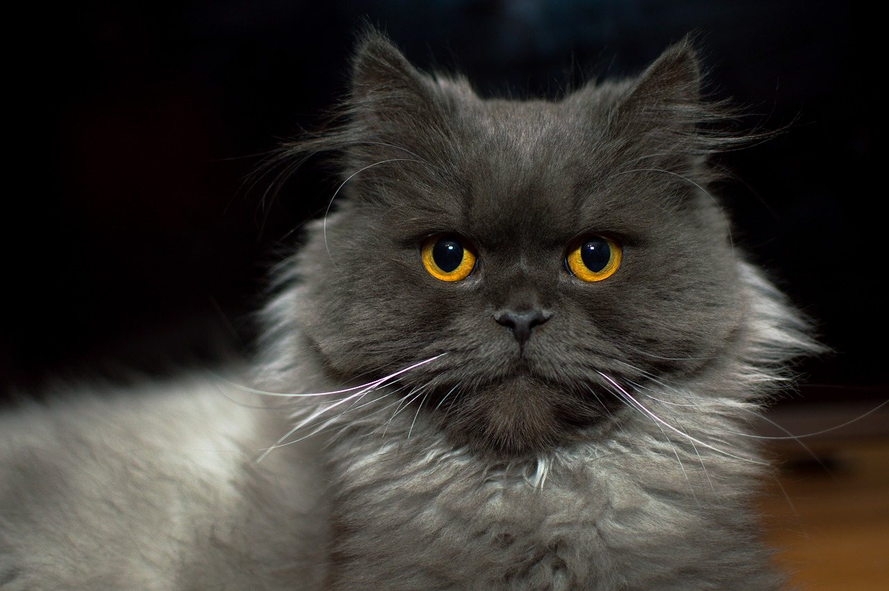 Canada S Very Best Grey Cat Names The Dog People By Rover Com