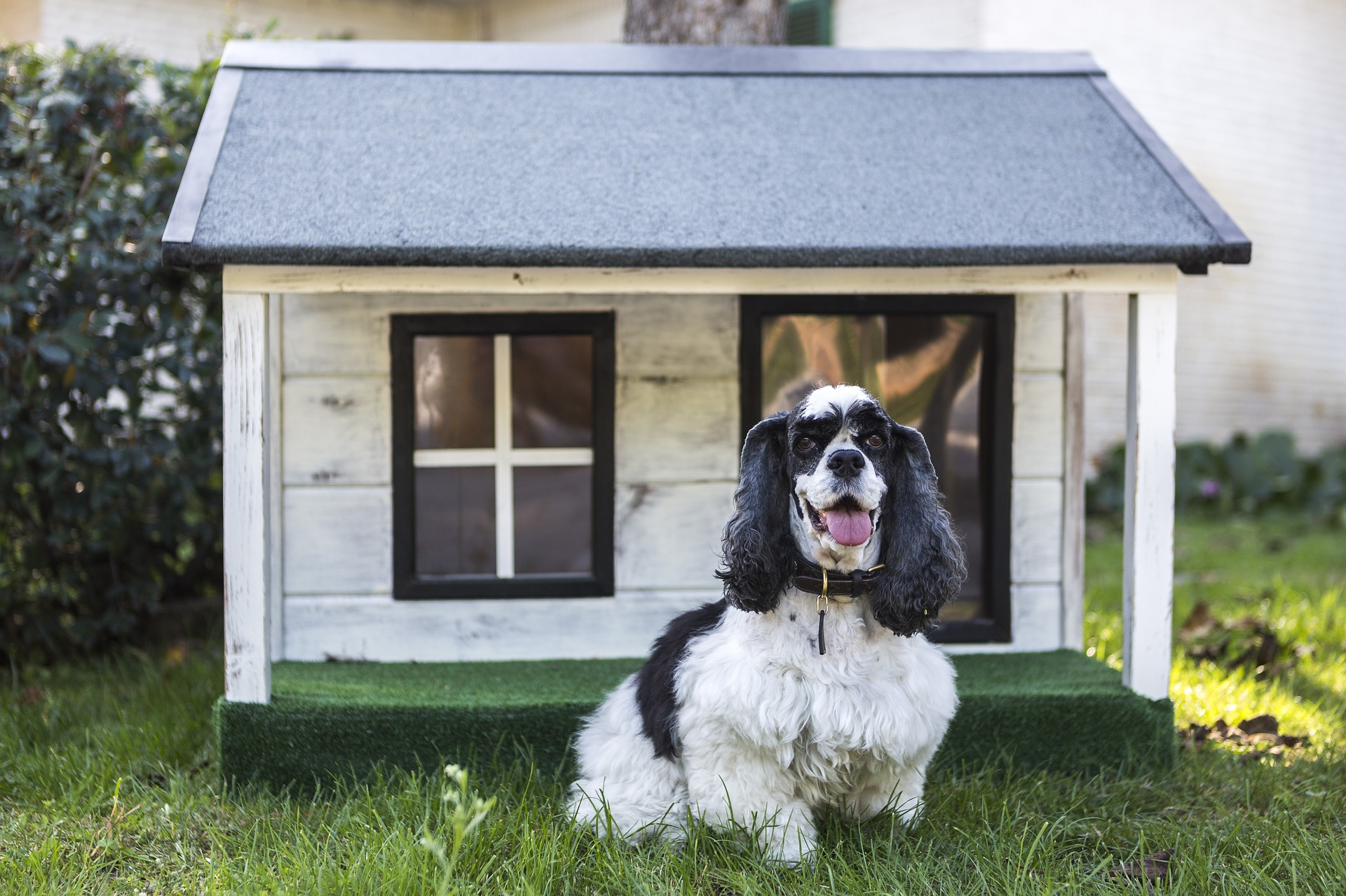 The Best Heated Dog Houses For Dogs In Winter The Dog People
