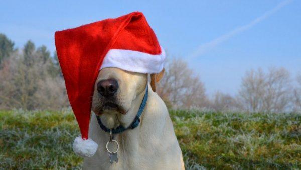 dog wearing oversized santa hat
