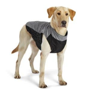 dog wearing Orvis light-reflecting jacket, Cyber Monday deal