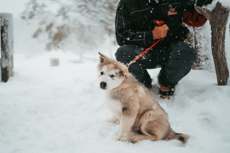 If you walk your puppy like this one in snow, beware of dog frostbite