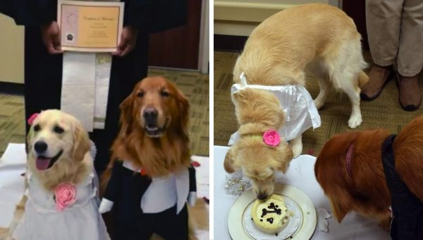 Hospital Therapy Dogs Get Hitched in Adorable Ceremony