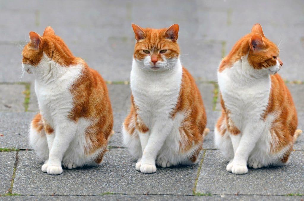 Orange Cat Names 100 Best Ginger Cat Names