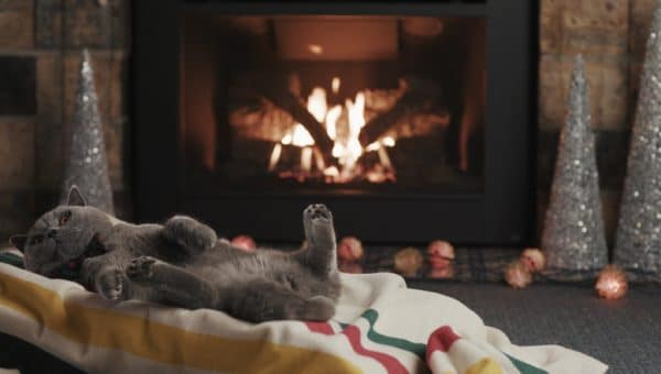 A gray cat lounges in front of a burning yule log