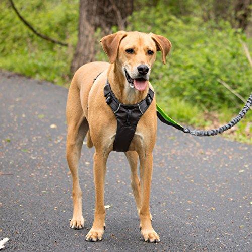 dog wearing Tuff Mutt dog harness