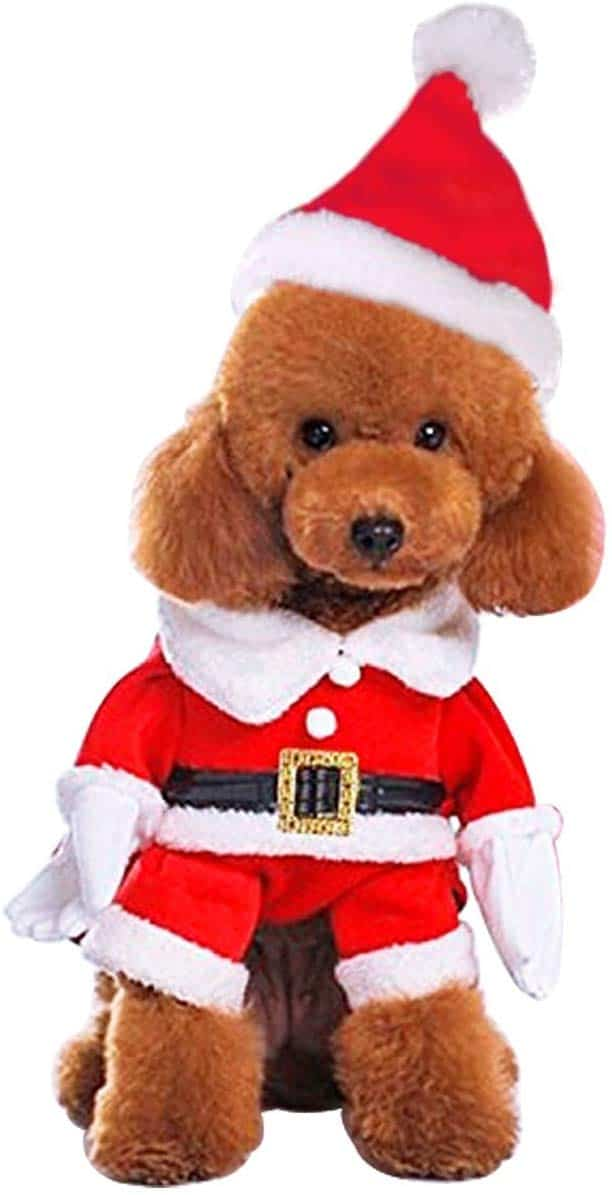 11 Best Christmas Dog Outfits To Get Your Dog In The Holiday Spirit The Dog People By Rover Com
