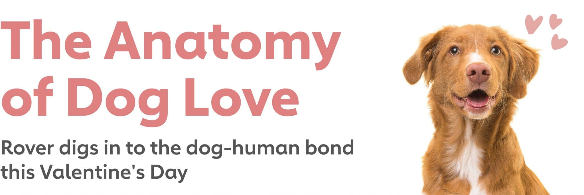 The Anatomy of Dog Love: New Research Shows that Dogs Are Changing Valentine's Day
