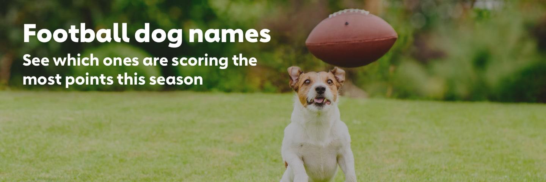 Top Football Dog Names