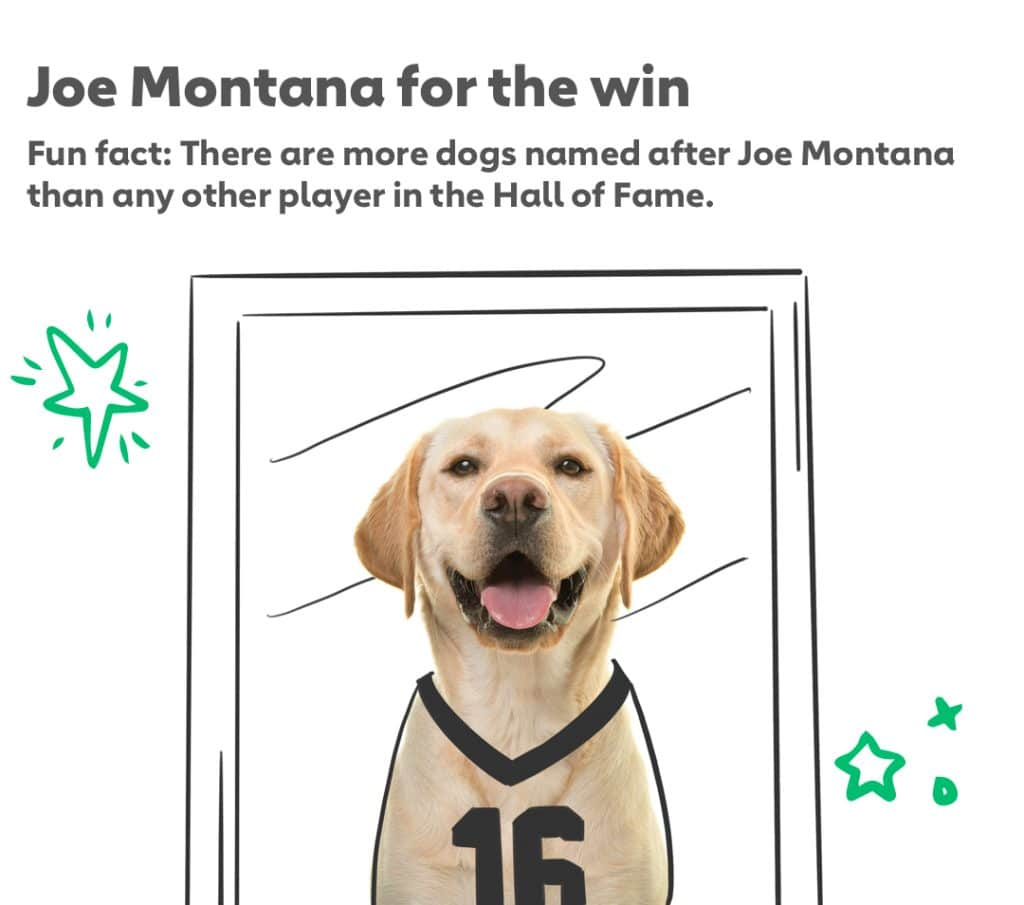 Joe Montana for the win Fun fact: There are more dogs named after Joe Montana than any other player in the Hall of Fame.