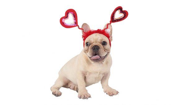 French bulldog wearing hearts headband