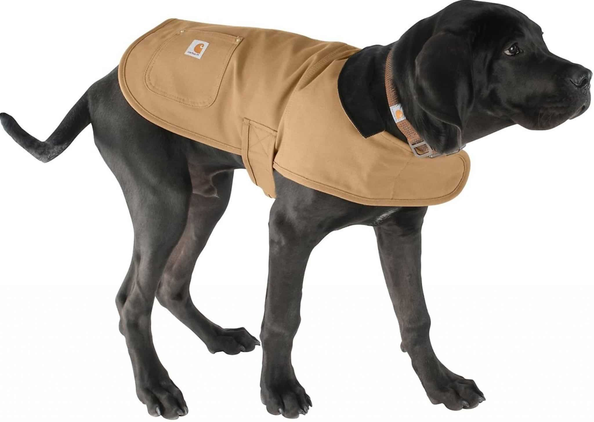 Our Review Of The Carhartt Dog C Coat