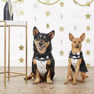 Frisco Valentine's Day dog tuxedo outfits