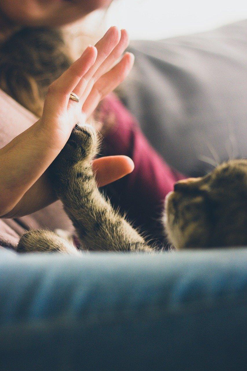 cat high fiving human