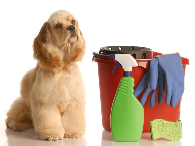 15 Pet Safe Non Toxic Cleaners We Love