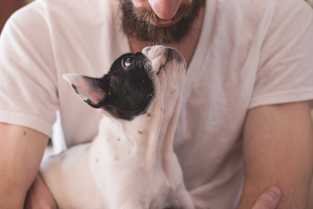 quotes about dogs that all dog lovers need to know