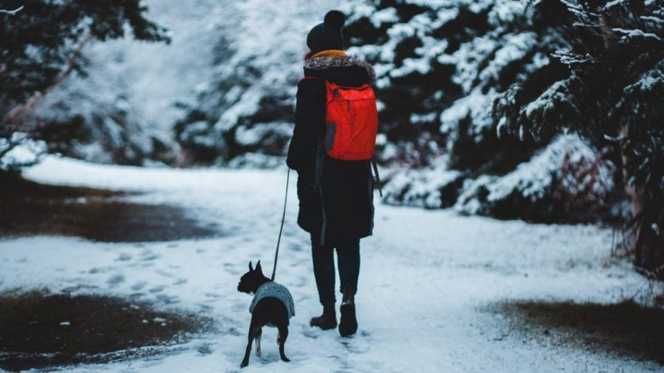 person walking dog in snow for Walk Your Dog Month