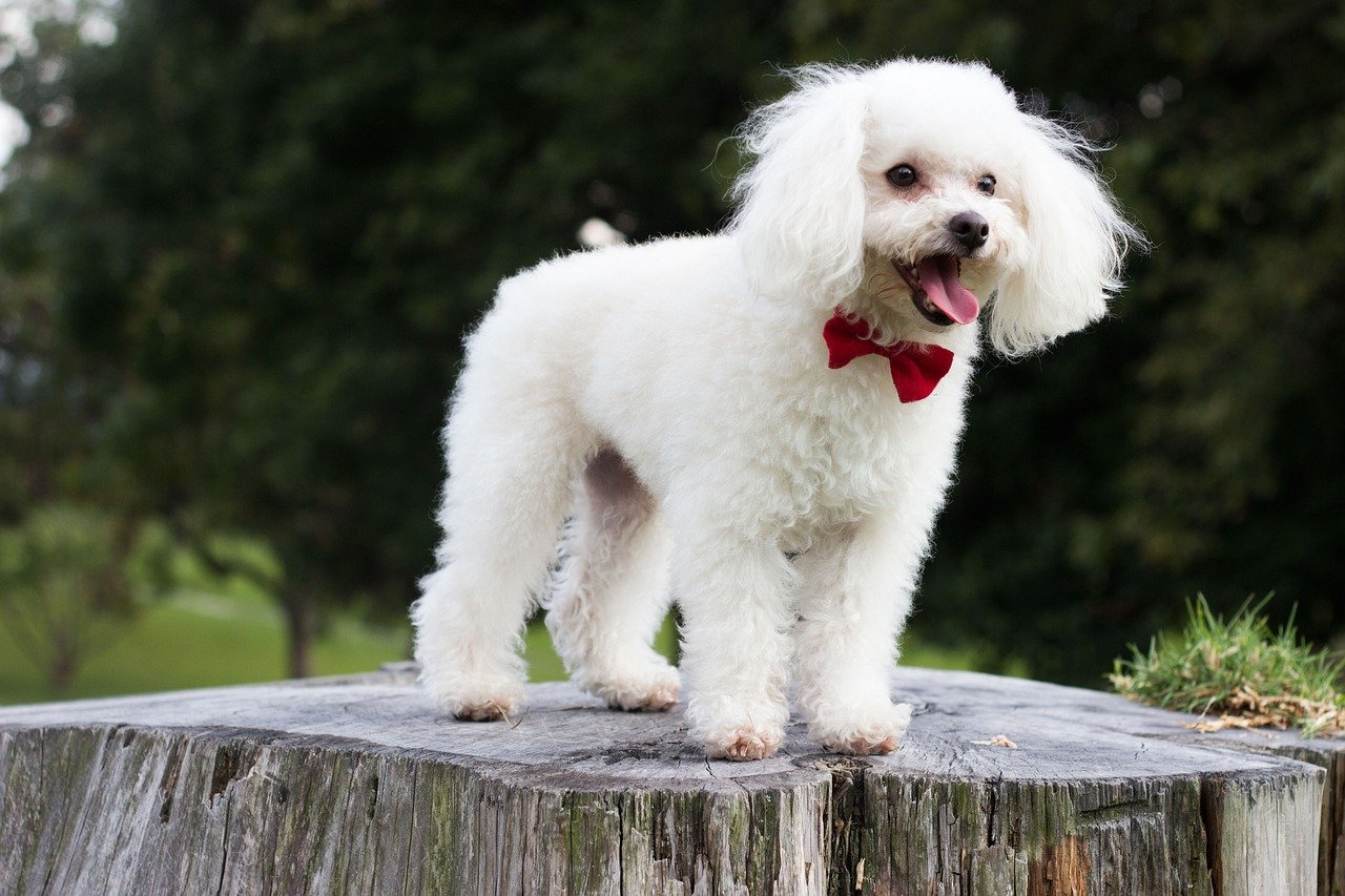 What Is A Puppy Cut Read This To Get The Look You Re Hoping For