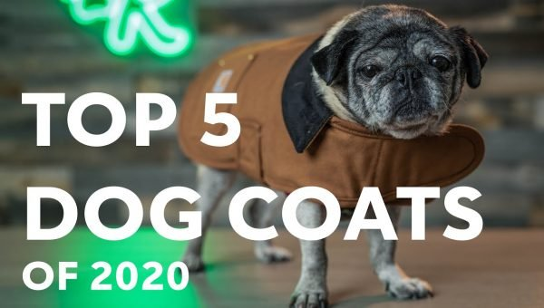 Top 5 Dog Coats cover image