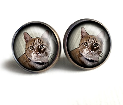 orange tabby stud gift earrings