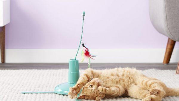 cat toys smartykat loco motion